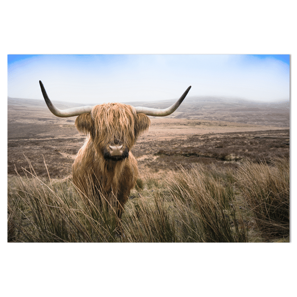 Wandpaneel Schotsehooglander gras HIP&STIJLVOL