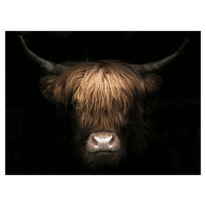 Tuindoek - Tuinposter - Schotse hooglander bruin