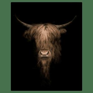 Tuindoek - Tuinposter Schotse Hooglander kop donker
