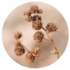 Muurcirkel - Gedroogde bloemen