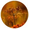 Muurcirkel - Gedroogde bloemen oranje