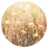 Muurcirkel - Weide bloemen